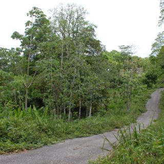 Large agricultural estate for sale in Manzanilla