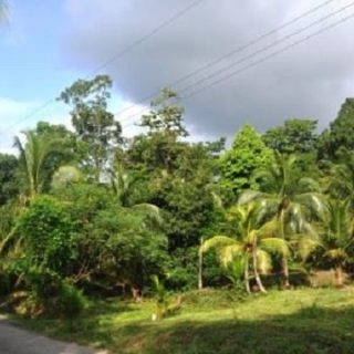 Agricultural Land at Matura