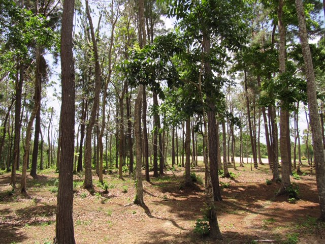 Freeport Land for Sale (Freehold) Sandy Hill Nature Reserve
