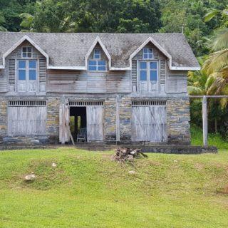 Lush Coastal Rain forest North Coast Land For Sale