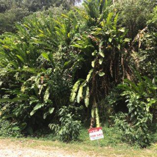 Lot 77C Rachel Terrace, Maracas Gardens, St Joseph – $875,000
