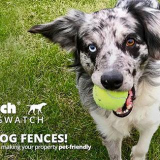 Trini Dogwatch