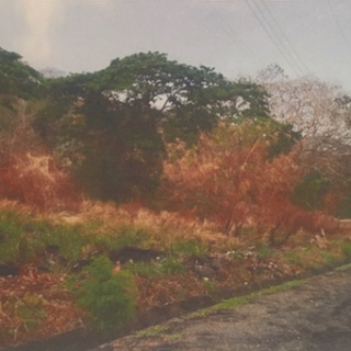 Land for sale Mot Mot, Tobago