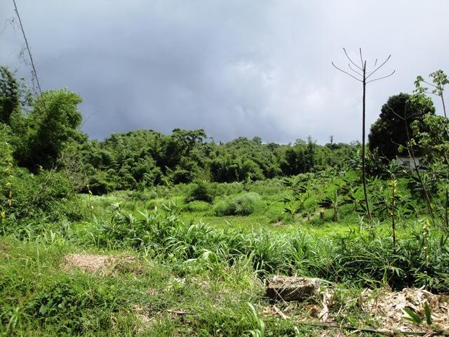 Land: Mason Hall, Tobago