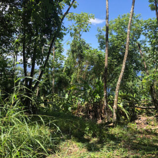 Land in Blanchisseuse for sale