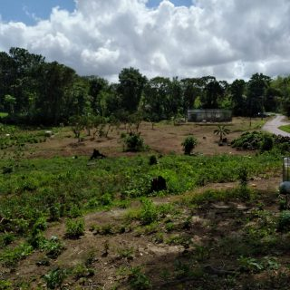 Talparo Land For Sale