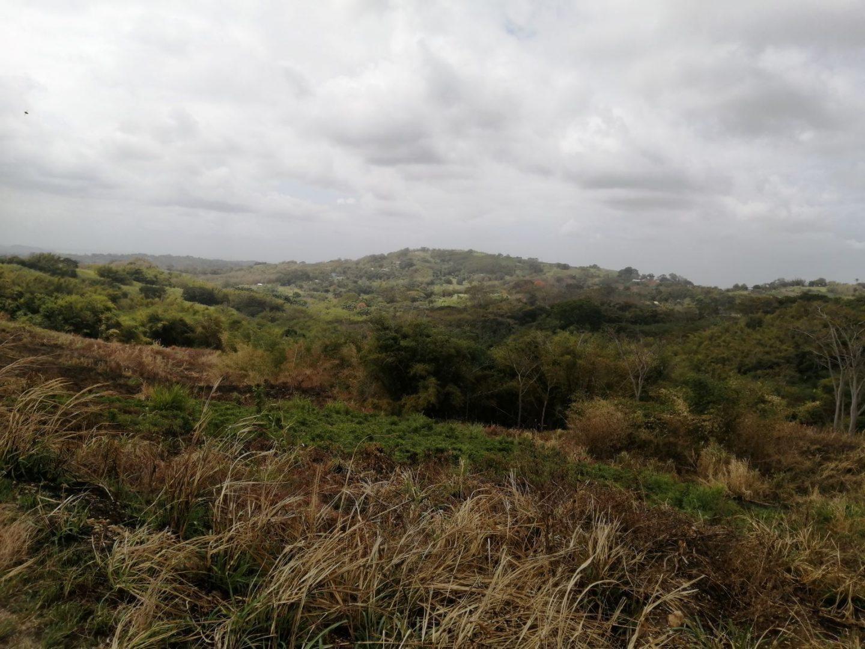 43 ACRES AGRICULTURAL LAND FOR SALE AT TORTUGA