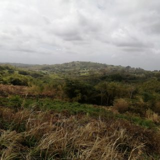 43 ACRES AGRICULTURAL LAND FOR SALE AT TORTUGA