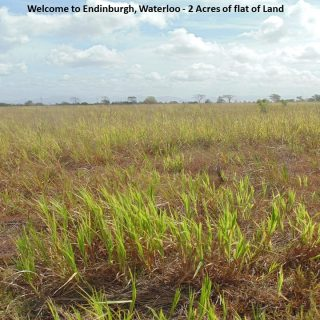 Agriculture land: 2 Acres leasehold in Waterloo