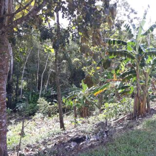 Rio Claro 10000sqft Freehold Land for Sale