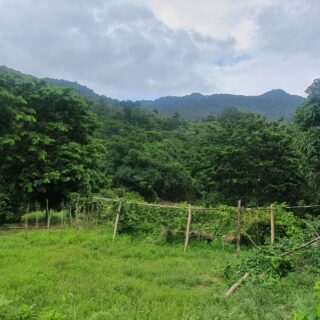 Santa Cruz, La Sagesse 2 acres – Land