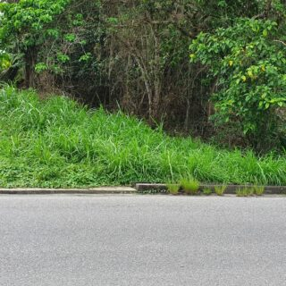 Land for sale. Guaico Tamana Road