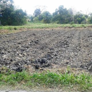 Mayaro Land for Sale