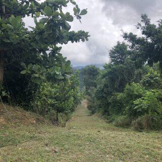 Acono Road, Maracas Valley