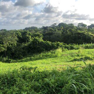 4 Lots Mayaro – Begorat Trace