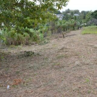 Freehold Land For Sale 10,000 sf Borde Narve, Princes Town