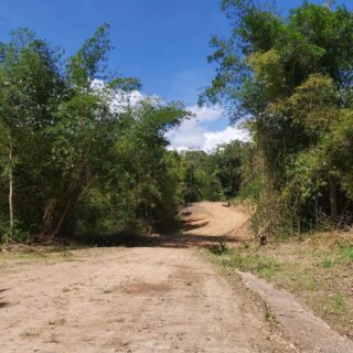 Amazing…..Lush…..Green……   Bella Vista Development – Land Only – Starting at $800,000.00