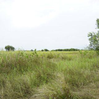 Land for Sale: 2 ACRES AGRICULTURAL LAND