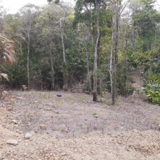 13 Acres, Agricultural Freehold Land, Tamana (Negotiable)
