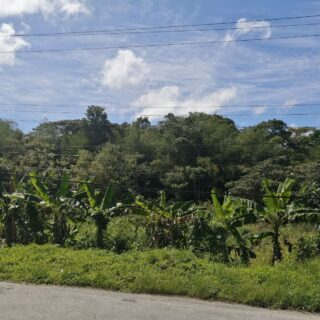 MANZANILLA LAND FOR SALE: AN INVESTOR'S BONANZA