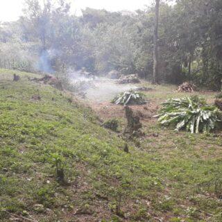 Prospect Estate Tobago Land For Sale