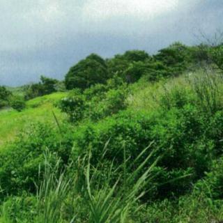 Development land Claxton Bay