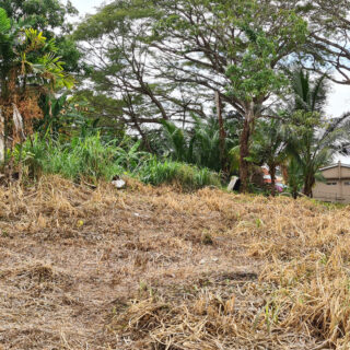 Land For Sale in Curepe