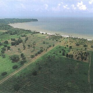 FOR SALE –Mayaro Manzanilla Road, St Joseph Estate, Mayaro – Estate of 65 acres agricultural freehold land