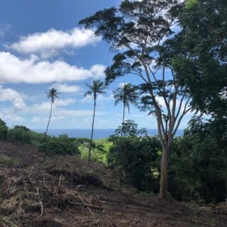 FOR SALE – Patience Hill, Tobago – Freehold land with magnificent views