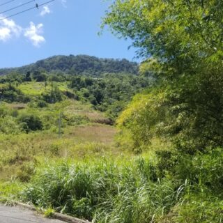 FOR SALE – Moraldo Trace, Santa Cruz – 3 Acres Freehold Land.