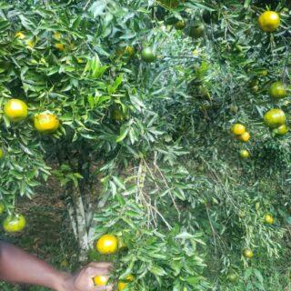 12.5 Acres Agricultural land for Sale Caratal -$1.450M