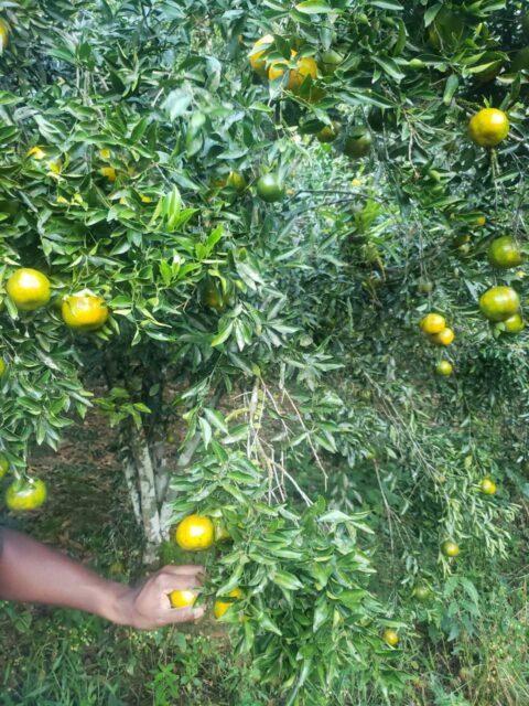 10 Acres Agricultural land for Sale Caratal – $1.450M