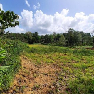 1.2 Acres Land in Howsen Village, Tamana – $550,000.00.