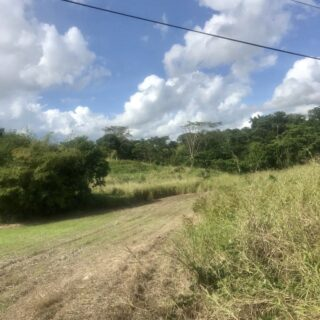 LAND FOR SALE – TODD'S ROAD FREEPORT
