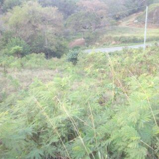 Tobago Land For Sale