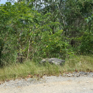Land For Sale in Maracas Gardens