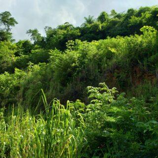 LAND FOR SALE: MARACAS GARDENS, ST. JOSEPH