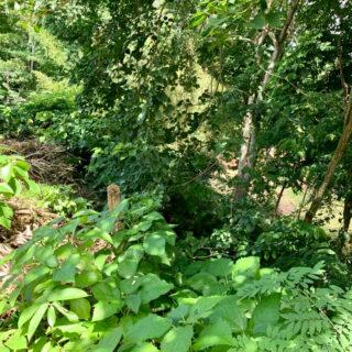 Land for sale – Sandbox Ridge, Moka, Maraval