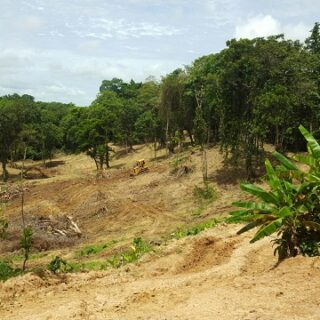 Agricoltural Land for sale – Cumuto