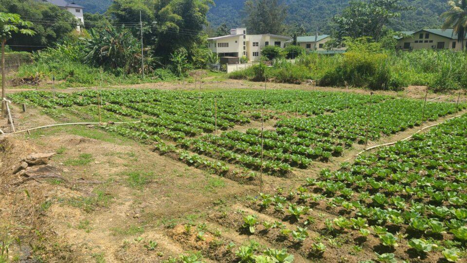 Freehold Residential land in Santa Cruz