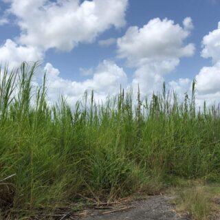 Land – Rambert 1/2 acre
