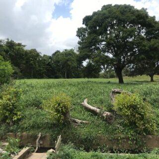 Five acres in Fysabad